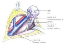 甲状腺 易发季节:四季 易发人群:不限 检查项目: