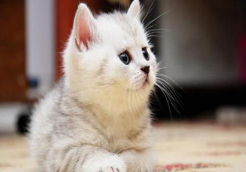 怀孕了,宠物猫咪怎么办?