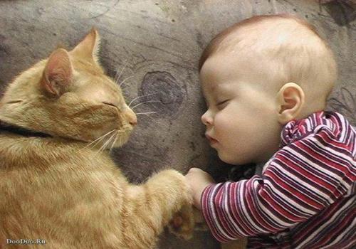 可爱宝贝带宠物看病
