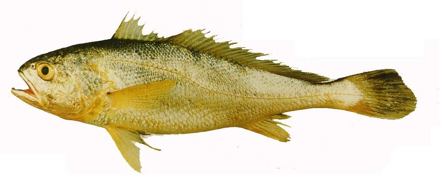 动物 鱼 鱼类 878