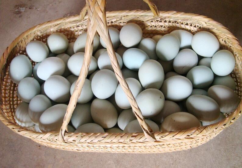 我想静静暴走�_维生素b2,维生素b1,维生素d,钙,钾,铁,磷等营养物质,吃起来较鸡蛋油润