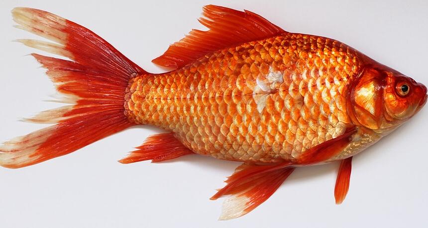鱼马桶原理