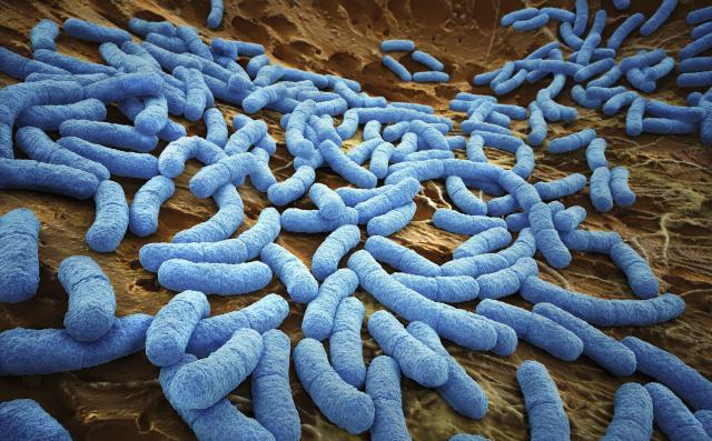 研究人员发现肠道菌群丰富的人心脏好